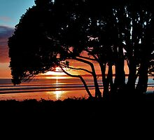 Pohutakawa Sunrise by Karen Lewis