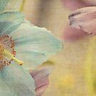 Early summer by Anne Staub