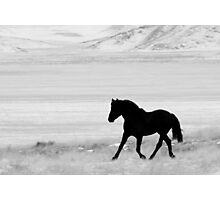 Stark Beauty Photographic Print