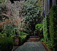 Garden Path by Michael Rubin