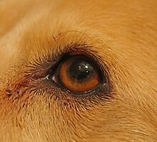 A Dogs Eye Reflection by purplehoodie1