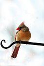Snow Cardinal by Eileen McVey