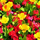 Poppies and Primulas by Simon Hickie