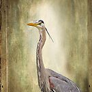 Great Blue Heron by Yannik Hay