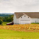 Amish Tabacco Farm by Monte Morton