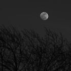 Moon Above the Trees..... by jrwyatt