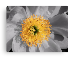 Crowned Peony Canvas Print