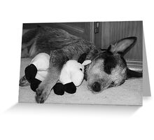Tired Heeler Pup Greeting Card