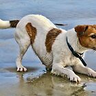  I&#x27;m Ready To Go-Jack Russell Terrier  by lynn carter