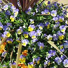 A Multitude of Violas by BlueMoonRose