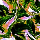 Fractalius Hosta by Anita  Pollak