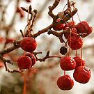 Drooping Berries by njumer