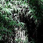 Lush Bamboo Forest by Matt Stojko