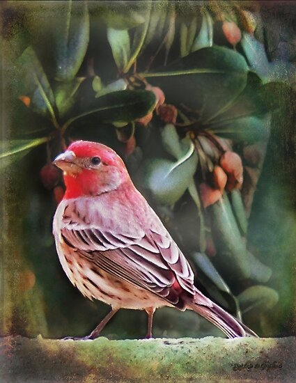 Little Bird IV (Art & Poetry) by Rhonda Strickland