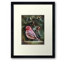 Little Bird IV (Art & Poetry) Framed Print