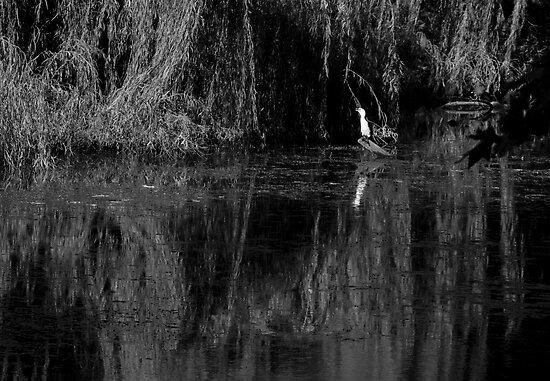 """The Bayou"" Hyde Park, Northbridge, W.A. by Sandra Chung"