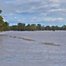 Murrumbidgee Floods Pano by bazcelt