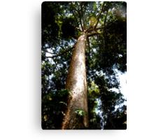 Tall Tree Canvas Print
