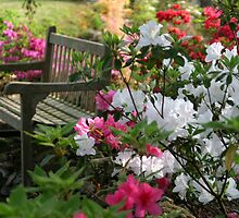 Azalea Festival Seating by Carolyn  Fletcher