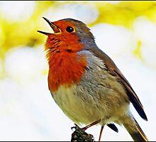 """ Robin Redbreast"" by mrcoradour"