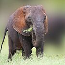 elephant grass by ajay2011