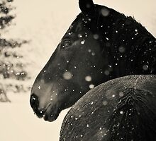 Black Horse VS. Snow Storm by BenjFavrat