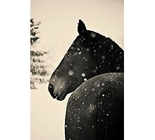 Black Horse VS. Snow Storm Photographic Print