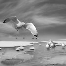 Thin Ice (bw) by John Poon