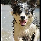 Border collie water running by Siti Studio