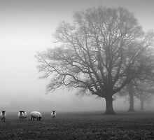 Sheep in the mist by John Trent
