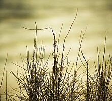 Sea grass with textured background. by Marianne Ellis