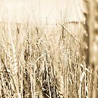 Sepia Wheat by Laura Godden