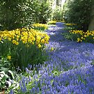 The Flower Lane, Keukenhof Gardens, 2007 by BlueMoonRose