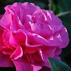 Pink Swell by Lozzar Flowers & Art
