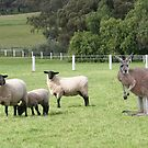 A Sheep Or Two, A K-Kangaroo by Jenny Brice