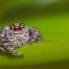 Watchful eyes of a bearded spider by Louis Tsai
