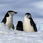 Antarctic Locals by Jan Fijolek