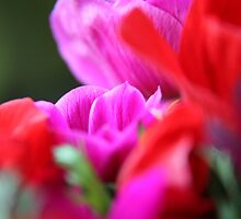 Vibrant bouquet by LynnEngland