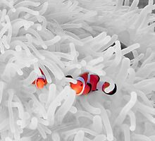 clowning around in their anemone by paulcowell