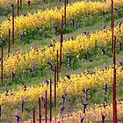Mustard Plants Amongst Vines by Robert Kobrzynski