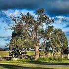 Tree by Julia Ott