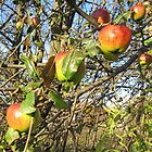 Fall Apples by Heather Crough