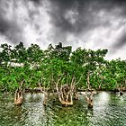 Mangroves Amidst the Dark Skies by Paulina Uy