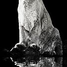 Cougar Reflection by KBritt