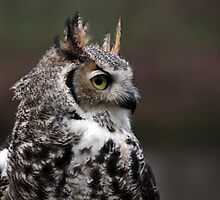 Young Eagle Owl by CraigSev