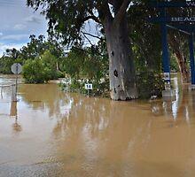 Wagga Wagga Floods, Caravan Park Pano by bazcelt