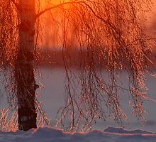 Winter magic by Remo Savisaar