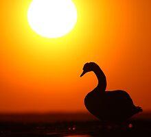Sun worshipper by Remo Savisaar