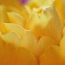 Buttery Folds by Astrid Ewing Photography