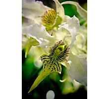 Exotic Orchids Photographic Print